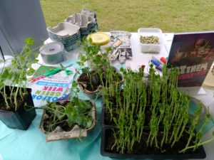 peashoots on table with flyers and eggboxes