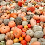 Huge colourful pumpkin pile