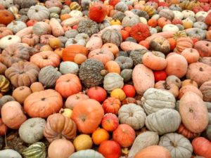 Oxford Pumpkin Festival @ Across Oxford and Oxfordshire